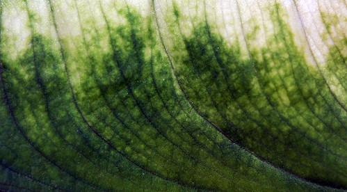 Leaf Texture 07