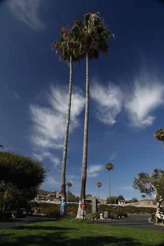 Palm Tree Boys