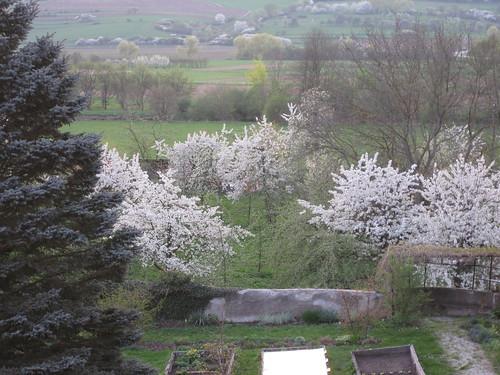 The garden of the schloss in blossom.