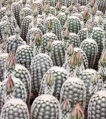 Cactus Army