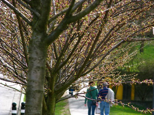 Spring Time in Stanley Park