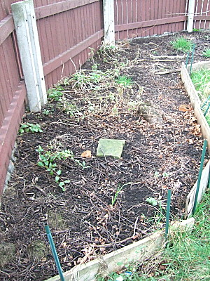 still to do - bed 5, which is full of weeds and fallen branches. It needs digging over, plant care, and weeding.