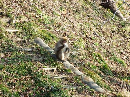 里に降りた猿~笹川流れ