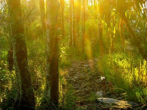 Last rays of sun through the trees2