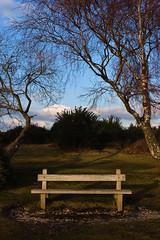 Portrait of a bench