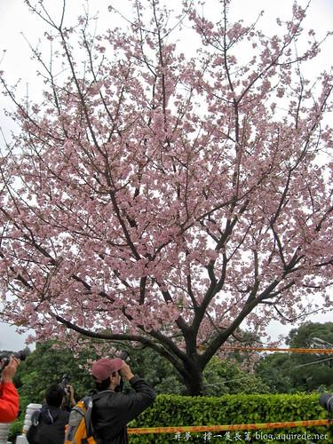 2009年3月淡水無極天元宮賞櫻_1695