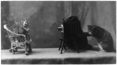 A cat is posed seated on a chair in front of a...