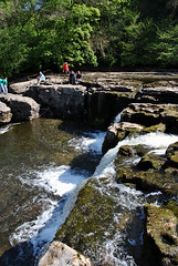 Aysgarth Falls 7