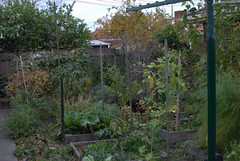 Backyard Food Forest