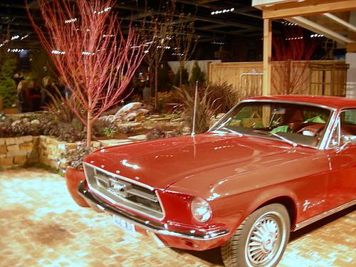 Red Mustang garden