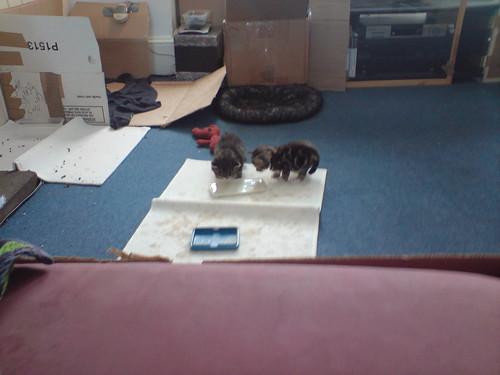 lapping kitties!
