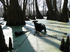 Merchant's Millpond State Park - Jimmie Explores Swamp