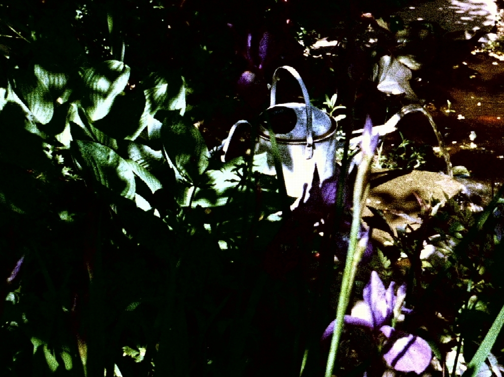 Memories of a Garden Pond with Irises