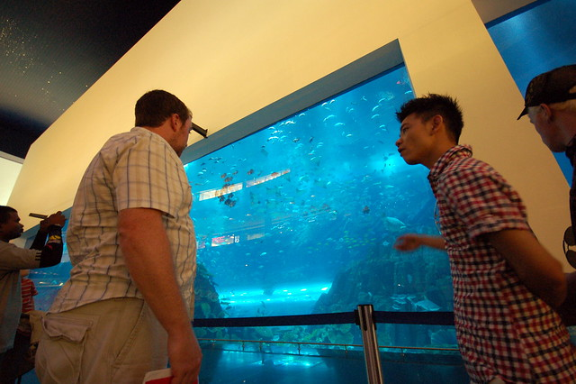 Dubai Mall aquarium