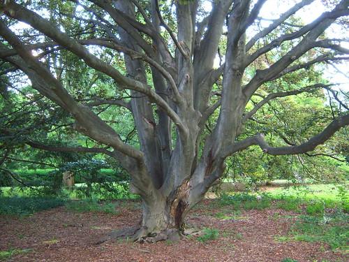 Nifty Tree