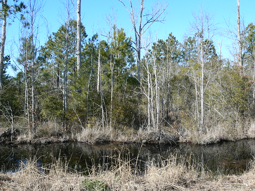 Camden County Jeep Trail - View From Trail