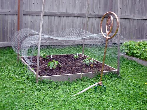 Garden after one week 5-30-2009 9-19-04 AM