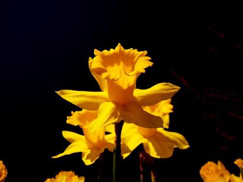 ....spring splendor