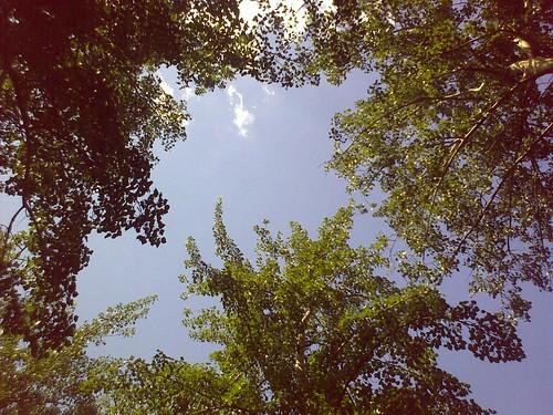 躺在元大都公园看到的天空