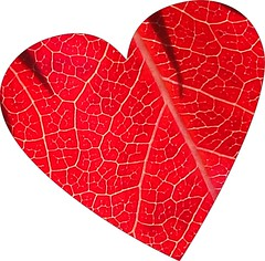 red heart, from leaf