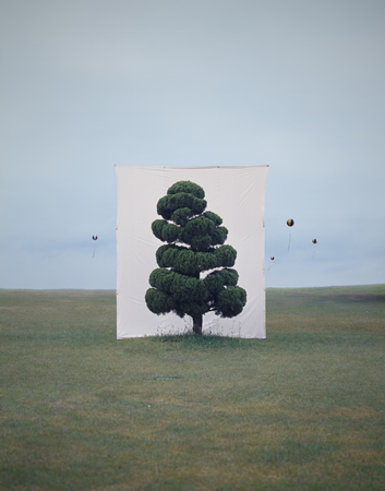 Tree #2, from the series Photography-Act, 2007