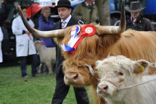 Highland Cattle by you.