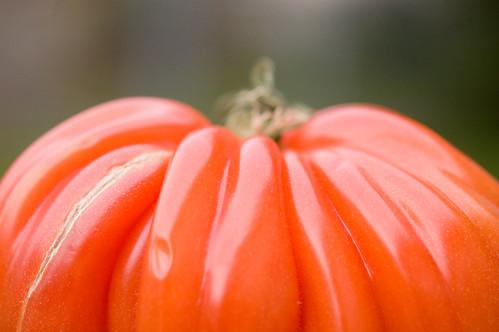 06.09.2009: tomato landscape (by bookgrl)