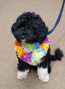 AP Obama Promised Puppy