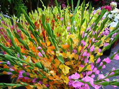 Flower shop, Singapore