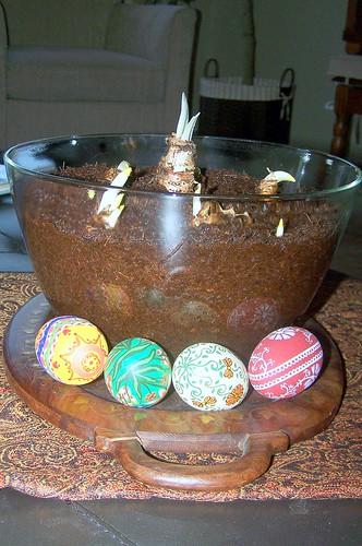 Bowl of amaryllis and paperwhite