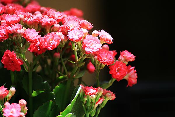 dạ, là hoa :))