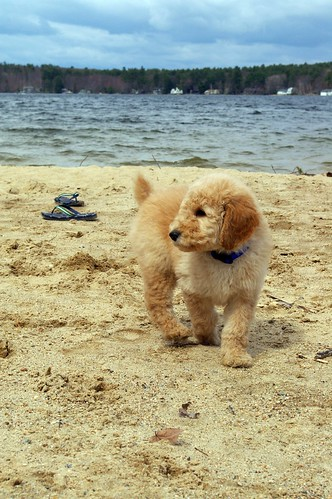 Cooper at the Beach