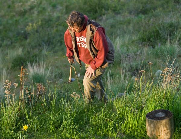 Getting rid of knapweed