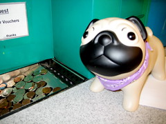 I broke into the puggy bank