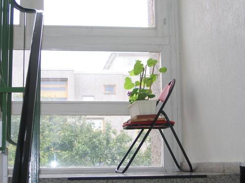 Stairwell plants