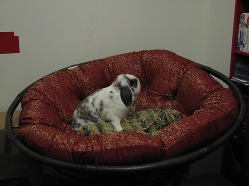 betsy on keith's chair