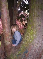 Tree climbing too