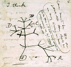 "Darwin's ""Tree of Life"""