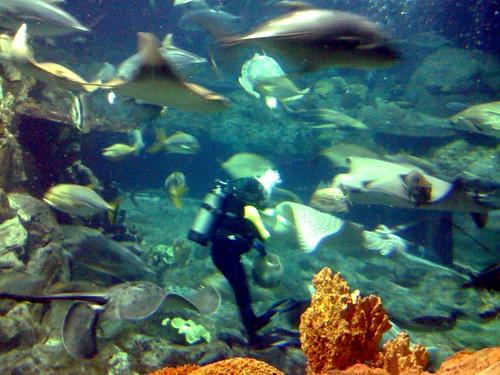 inside the aquarium 2