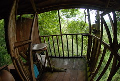 The bathroom at our treehouse in the Gibbon Experience had a bees nest right underneath