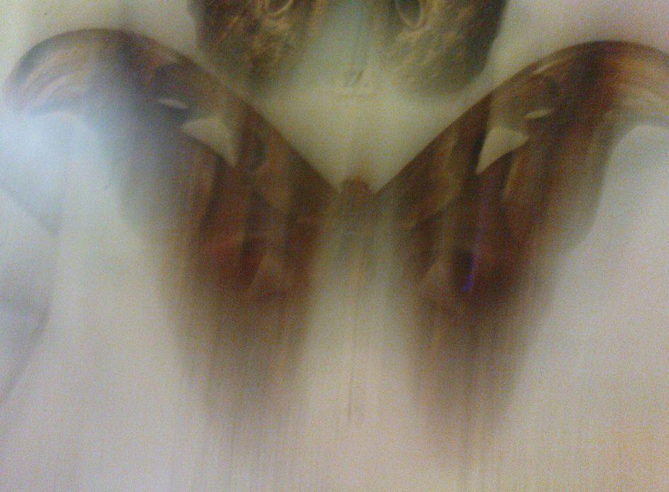 Butterfly - Kizzie