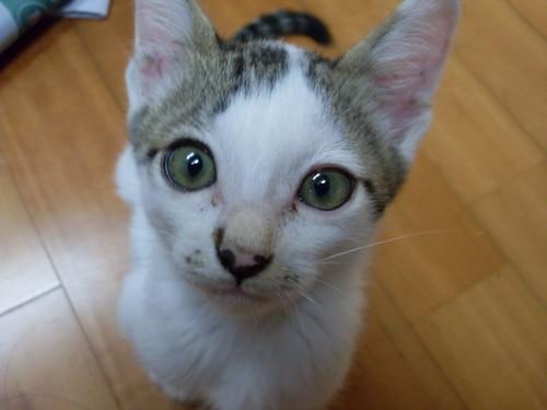 커다란 초록색 눈을 뜨고 정면을 귀여운 표정으로 쳐다보는 고양이