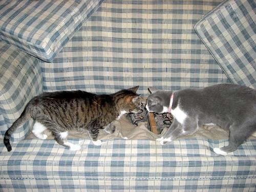 Showdown at the Sofa Hole!