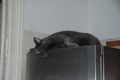 Jinx auf Kühlschrank