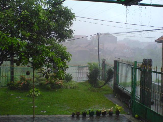 Jeruk Bali gw tumbang!