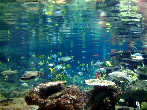 acquarium 7