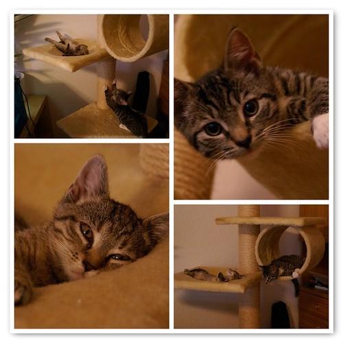 Katzenmomente