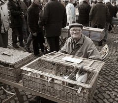 A day at the pigeon market