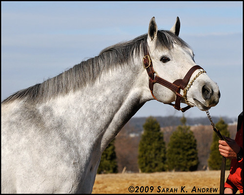 Congressionalhonor at Northview Stallion Station (PA)
