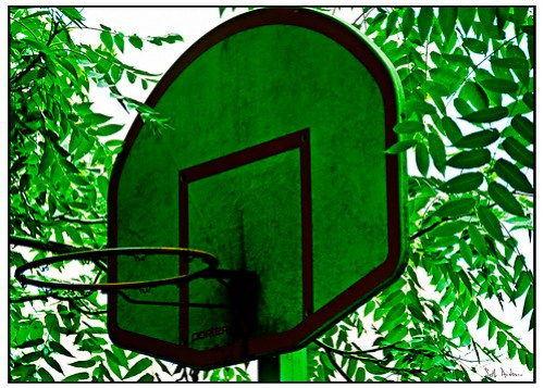 Summer Hoops - Lomo